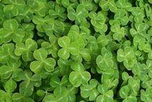 Nature : #Vert c'est vert / Vert c'est #bio, c'est #green