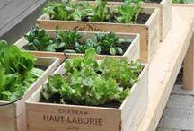 Nature : #Légumes Doux Good / #nature #saison #légumes