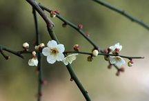 Saison : Éveil des #sens au # printemps / #saison #printemps #sens #beauté