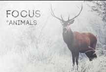 FOCUS - animals / All picturs about animals