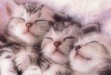 Kittens / lovely kittens