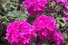 kwiaty / piękne ozdobne kwiaty