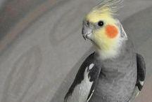 parrot ¨¨¨¨¨¨¨¨