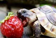 turtle =