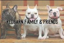 Redbarn Family & Friends / This board features awesome dog and cat photos from our fans and followers.  -- Brought to you by: www.redbarninc.com and our Facebook Fans & Instagram Followers. LIKE us: facebook.com/redbarninc & Follow us: @redbarninc