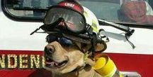 Rescue Animals / Photography of fire rescue animals or animals being rescued! Love dalmatians and puppy dogs!