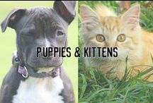 Puppies & Kittens / The perfect board for when you want to indulge in the cutest puppy and kitty pictures on the internet.