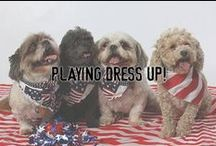 Playing Dress Up! / Not only for Halloween, this is a collection of our favorite pictures of pets in costumes...are you ready to play dress up?