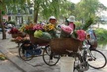 TravelMoodz - Vietnam / Vietnam