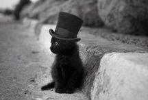 cats / CATS.