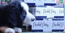 Packed Party Puppy Overload / PUPPIES. That's all.