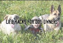 Life Hacks For Dog Owners / Here you'll find potentially helpful life hacks about anything and everything that has to do with being a dog owner.