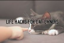 Life Hacks For Cat Owners / Here you'll find potentially helpful life hacks about anything and everything that has to do with being a cat owner.