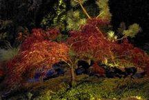 Növények megvilágítása / Kültéri világítás tervezésekor érdemes kiválasztani néhány szép növényt, amelyeket világítással kiemelünk – lehet az egy fa, bokor vagy egy virág, ami nappal is kitűnik a környezetéből, ezáltal különleges hatást érünk el.