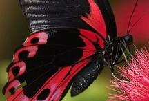 Ƹ̵̡Ӝ̵̨̄Ʒ  butterflies Ƹ̵̡Ӝ̵̨̄Ʒ