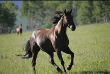Equinical / horses are better than people / by J J