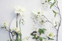 Blumen / Warum wir Blumen lieben