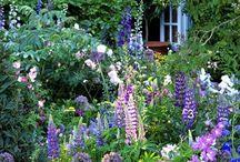 Garten / Irgendwann erwischt sie uns alle: Die Gartensucht