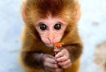 Baby animals Teddybär / Süß!!!