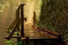 ENV - Forest / Inspiration - Natural Environments: Forest