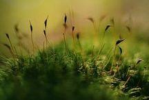 ENV - Moss