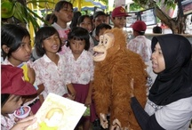 Primate Education Projects