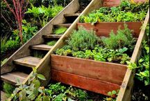 Environmental WellBEing / Recycling, Solar, Green Living, Allergies, Environmental toxins.