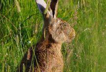 Hares / Uploaded Photos by Rob Barnett