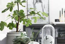 Plants. / Green, greener, greenest..