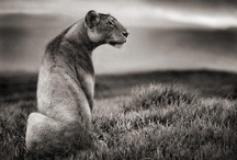 Black & White / by Ian Paget