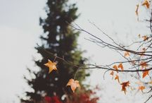 autumn. / by Charley Amber