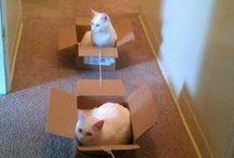 Cats, cats everywhere :-) / by Martina Skupinová