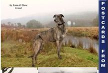 """Postcards from Obie the Scottish Deerhound / Obie the Scottish Deerhound lives in Ireland. He sends up """"postcards"""" about his travels each month to our magazine. Read all issues for free at www.CelticGuide.com"""