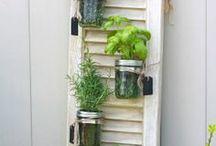 Gardening Ideas and outdoor decor