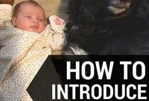 Pets / Everything you need to know about introducing pets to your kids and vice versa!