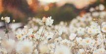 ❃ flowers ❃