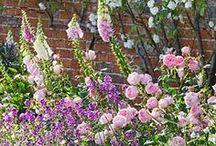 Gardens / by Cynthia Wall Interiors