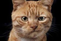 FACEBOOK CATS / by CARI CUPCAKE