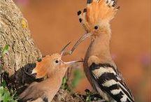 ANIMALS-BIRDS-BUTTERFLIES-....... / We love a lot.... / by Ümran Uyanmış