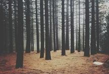 """// WOODS / / """" The woods are lovely, dark and deep..."""""""