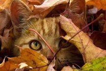 FALLing for AUTUMN / My very favorite season.  Fall.  Autumn. / by Tabbie Smith-Elliott
