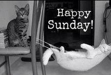 Sunday/Zondag / Sunday/Zondag