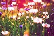 Garden&Flower world