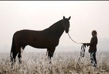 Equestrian love