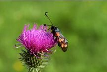 Insects / Macro photography