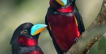 Aves do mundo! / Singelas, belas ou magníficas manifestações da natureza!