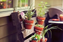 Home - Gardening / by Danielle Villagomez