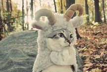 CatLady / For all the furry children and the humans that adore them! / by Melissa Soto
