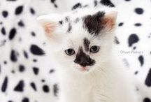 Cats and Kittens / Cuteness defined