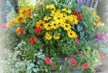 Container Gardening / Ideas for planters and hanging baskets / by Kristin Meador